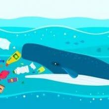 Plastic Pollution in the Ocean